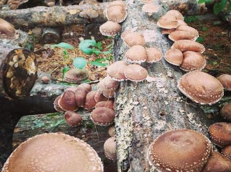 Outdoor Mushroom Cultivation Classes