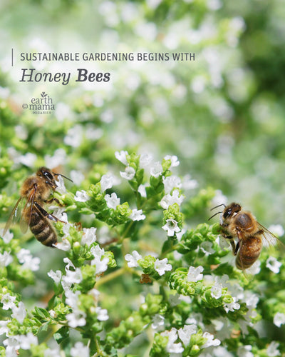Sustainable Gardening Begins with Honey Bees