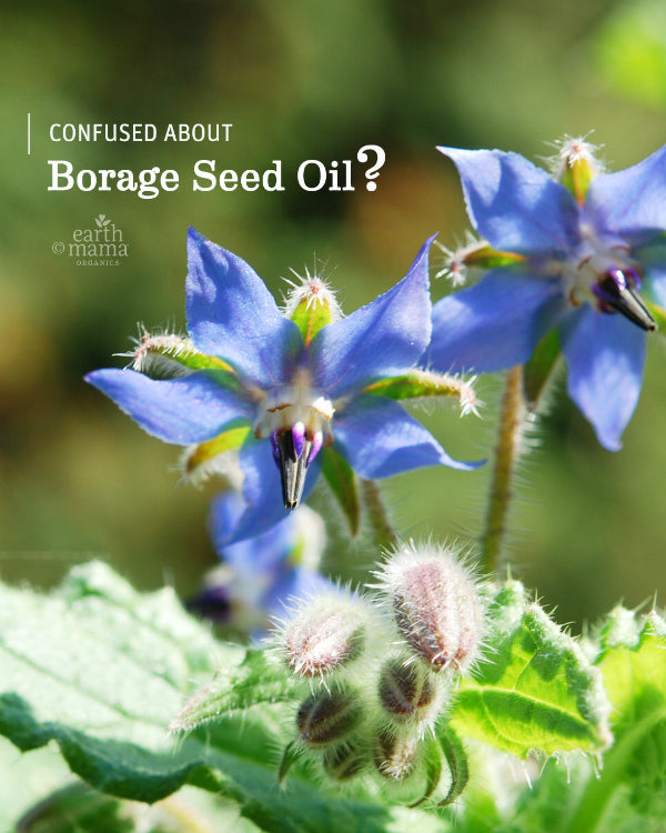 Confused About Borage Seed Oil? - Earth Mama Blog