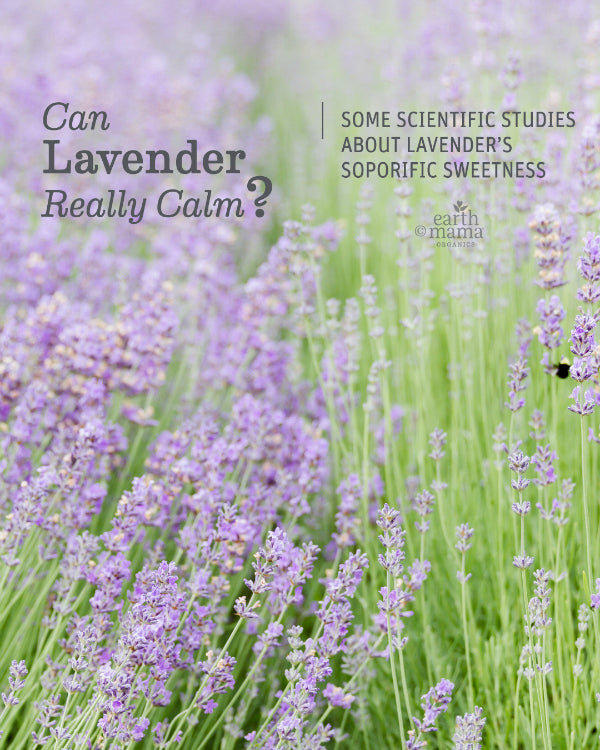 Can Lavender Really Calm? - Earth Mama Blog