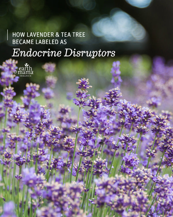 How Lavender and Tea Tree Became Labeled As Endocrine Disruptors - Earth Mama Blog