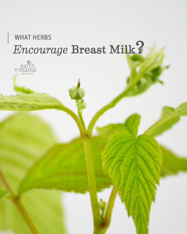 What Herbs Encourage Breast Milk? - Earth Mama Blog