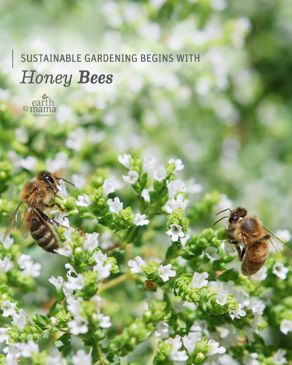 Sustainable Gardening Begins with Honey Bees - Earth Mama Blog