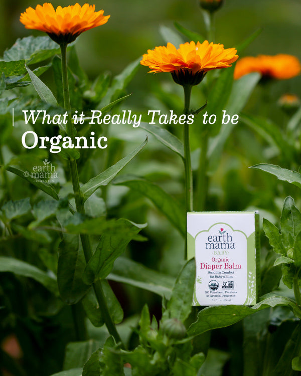 What it REALLY Takes to be Organic - Earth Mama Blog