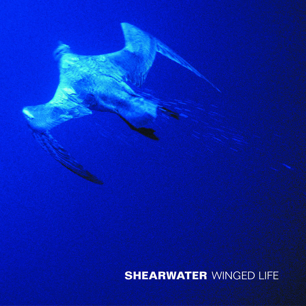 "Shearwater - ""Winged Life"""
