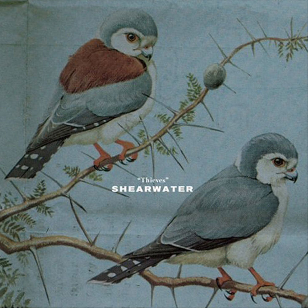 "Shearwater - ""Thieves"""