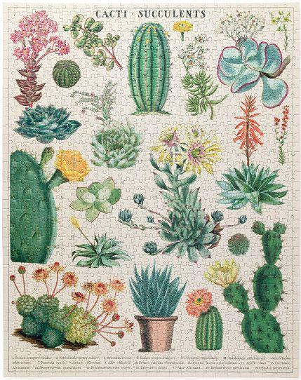 Cacti & Succulents Puzzle 1000 pc - r. h. ballard shop