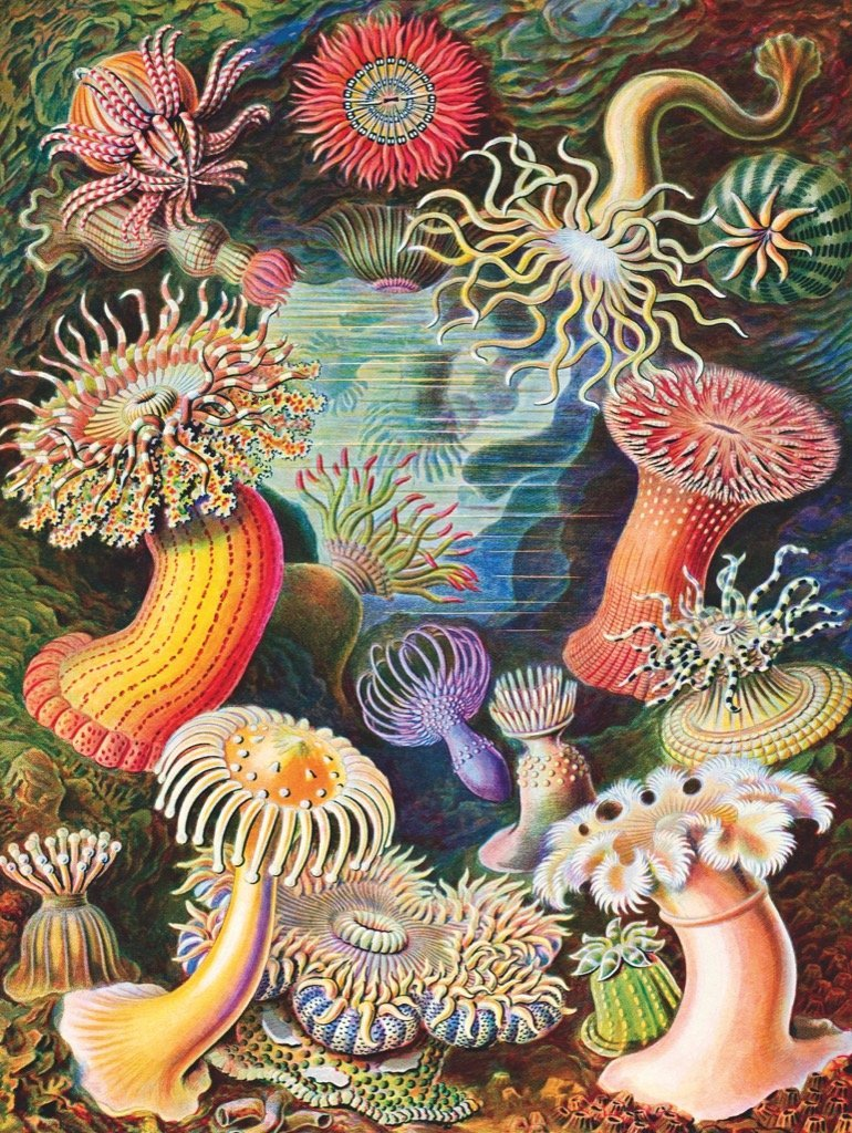 Sea Anemones 1000 pc - r. h. ballard shop