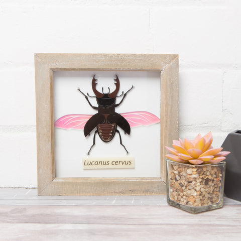 Framed Beetle Wall Art