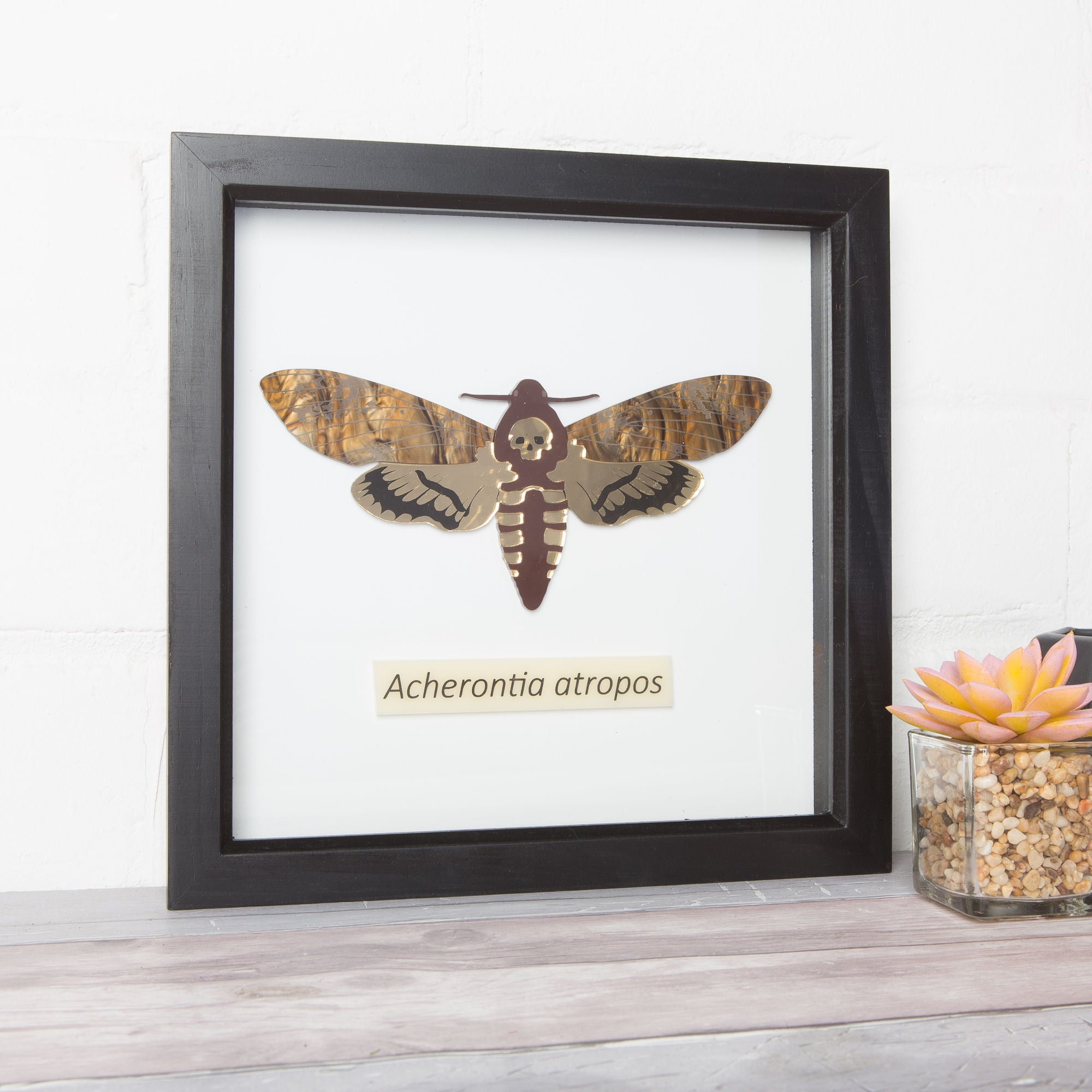 Sugar & Vice Framed Hawkmoth Wall Art