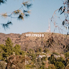Hollyweed Ringer Tee