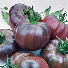 Load image into Gallery viewer, 'Black Russian' Tomato