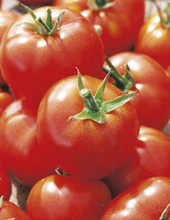 Load image into Gallery viewer, 'Siberian ' Tomato