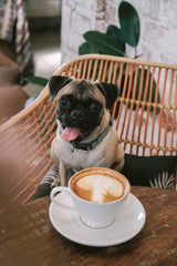 puppucino for your pooch pal