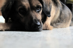 pets are left at animal shelters or end up in rescue for normal reasons