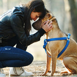 gadgets for dog owners