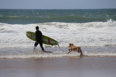 surfing for dogs