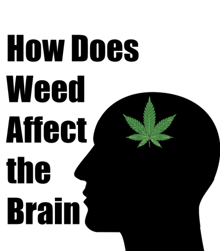 Understanding Weed's Effect on Brain Functions