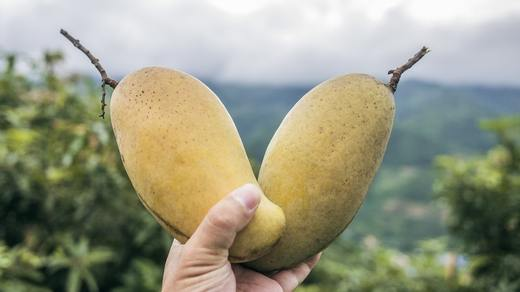 Mangoes, Sweet Potatoes and Other Foods that Enhance Your High