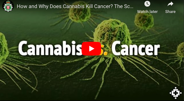 Cannabis vs Cancer. 'What If Cannabinoids in Cannabis Cured Cancer & Other Diseases?'