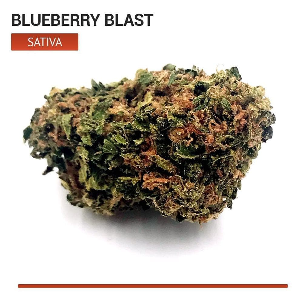Blueberry Blast (Sativa)-Bloom Society