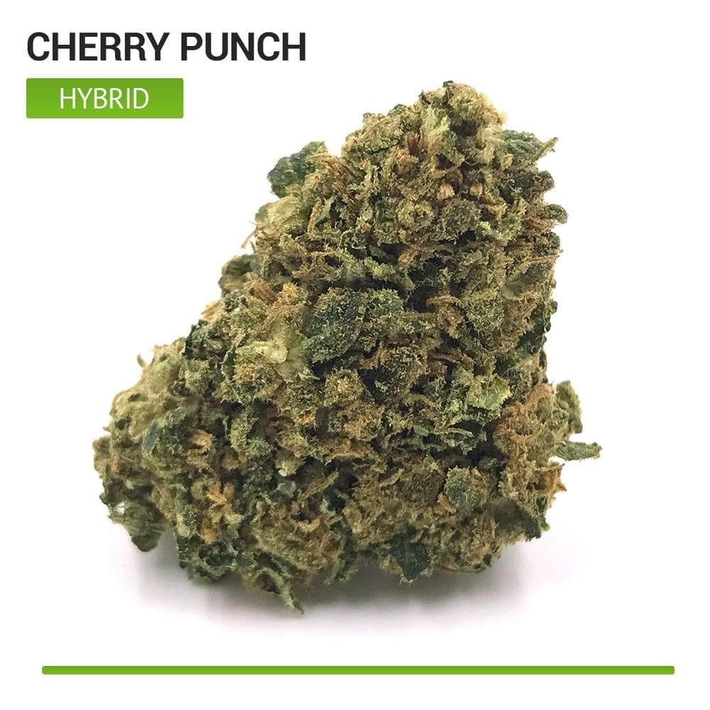 Cherry Punch (Hybrid)-Bloom Society