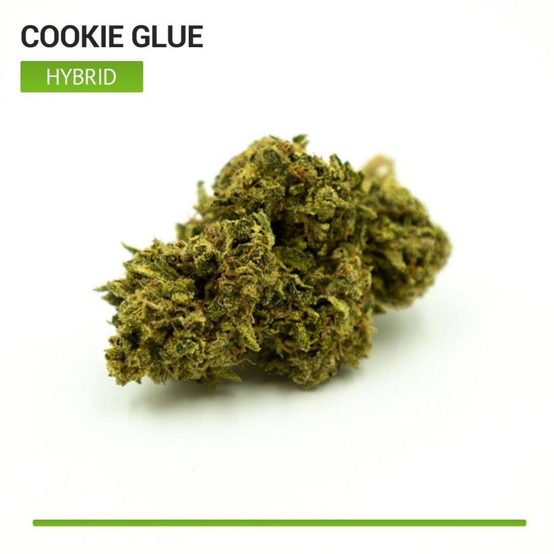 Cookie Glue (Hybrid)-Bloom Society