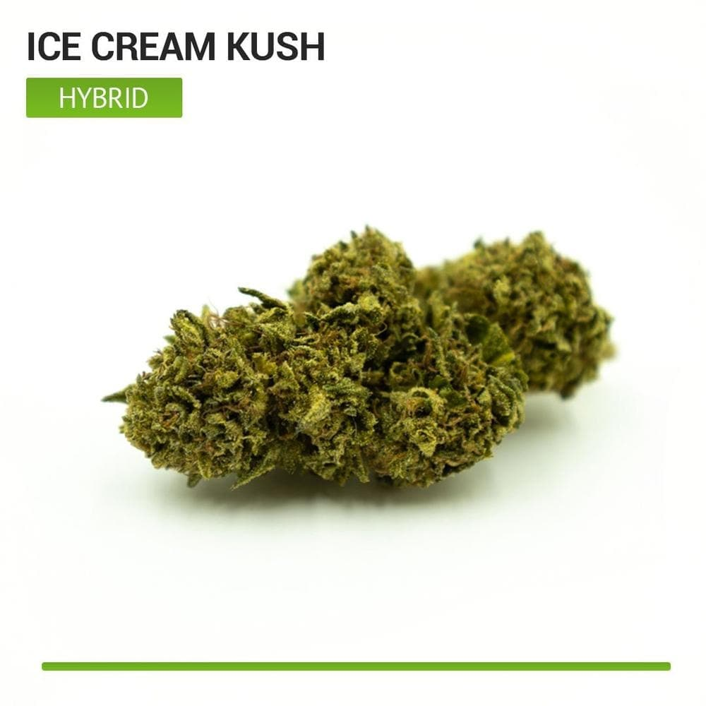 Ice Cream Kush (Hybrid)-Bloom Society