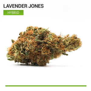 Lavender Jones (Hybrid)-Bloom Society