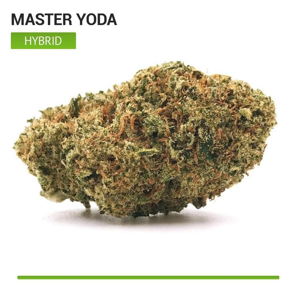 Master Yoda (Hybrid)-Bloom Society