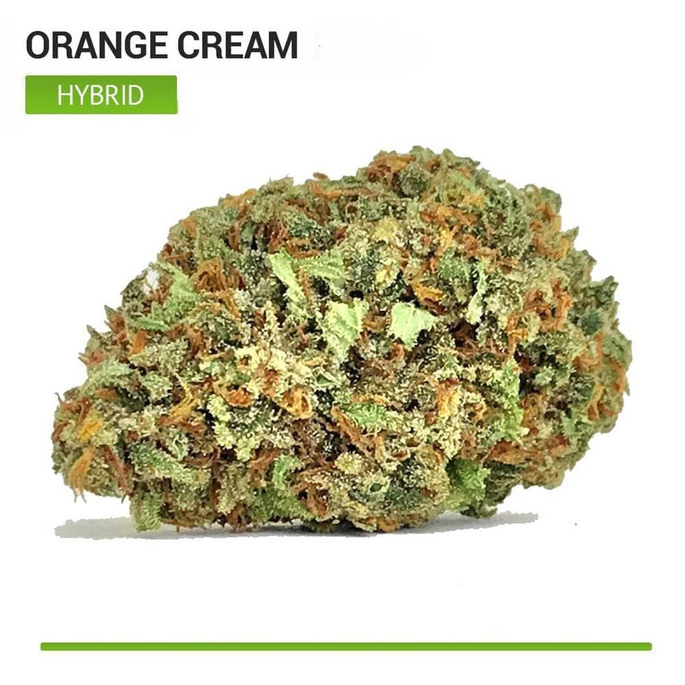 Orange Cream (Hybrid)-Bloom Society