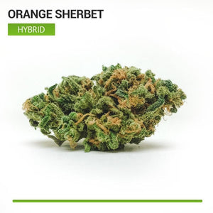 Orange Sherbet (Hybrid)-Bloom Society