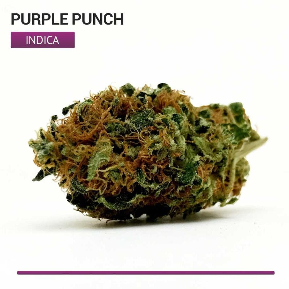 Purple Punch (Indica)-Bloom Society
