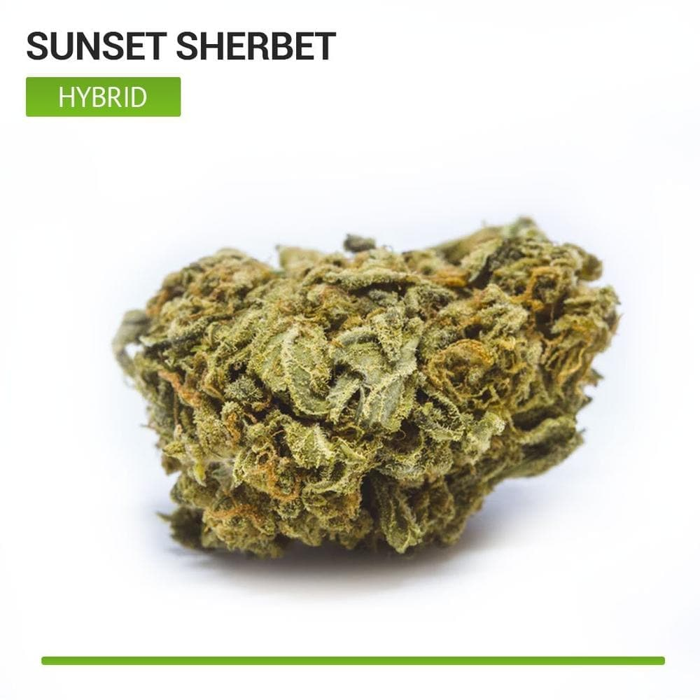 Sunset Sherbet (Hybrid)-Bloom Society