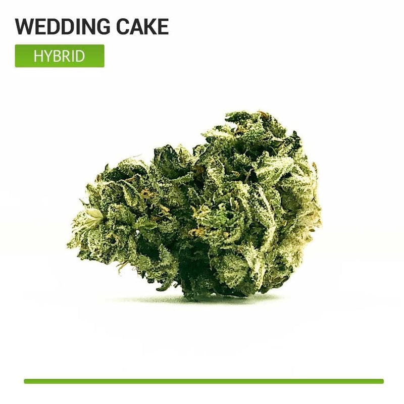 Wedding Cake (Hybrid)-Bloom Society