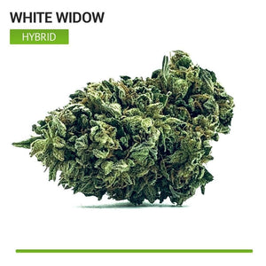 White Widow (Hybrid)-Bloom Society