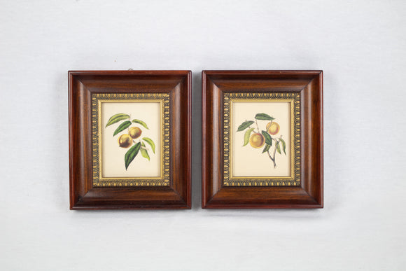 Pair of Framed Botanical Fruit Lithograph Prints