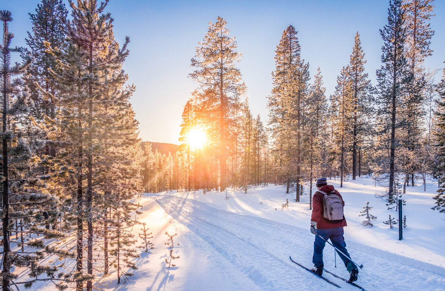 man going into the sunrise on nordic skis in a woodland nature setting