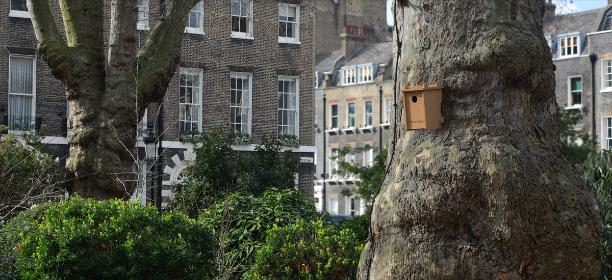 Habi-Sabi Little Bird Box in Bedford Square, London