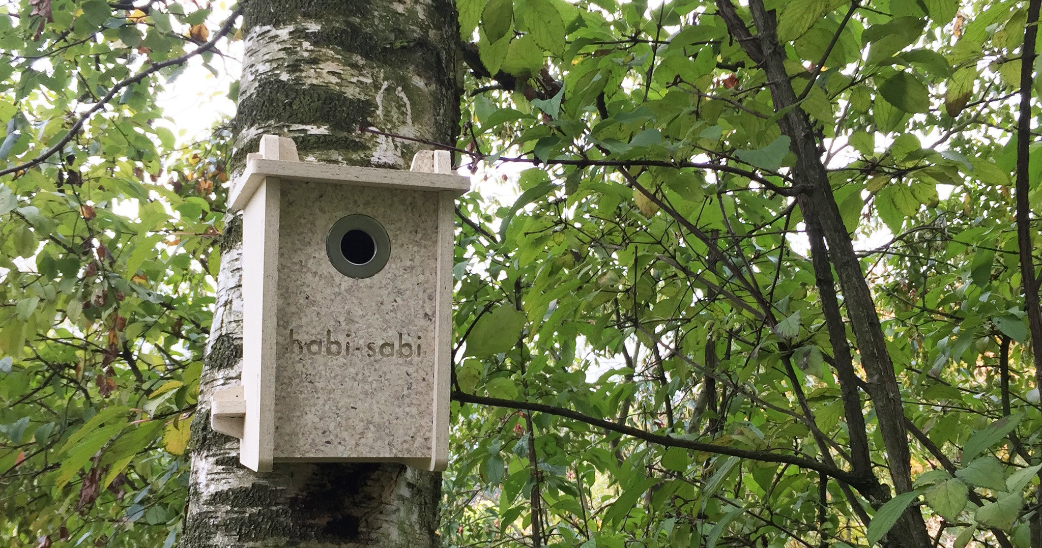 habi-sabi_little-bird-box_birch-forest