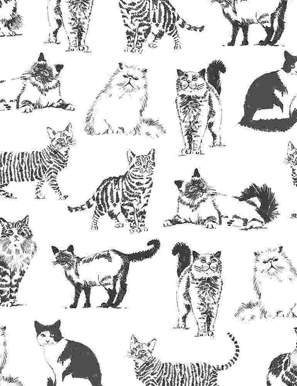 Pets - Cats - White Sketched