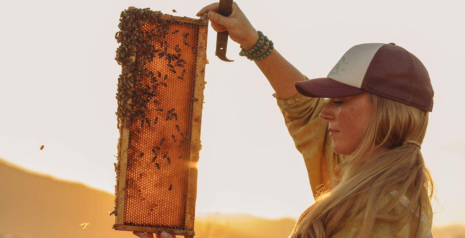 Bees work together to make honey