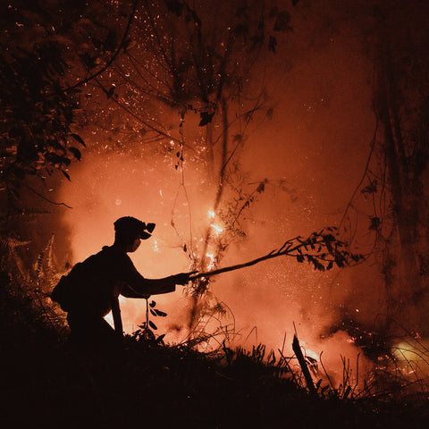 forest fire borneo