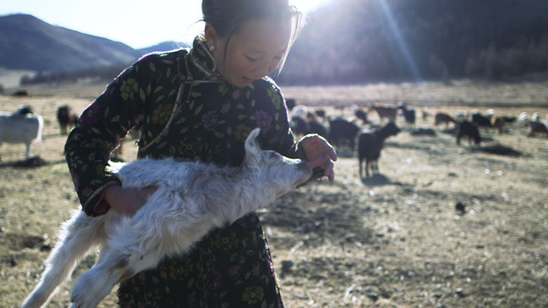 Young Cashmere Goat Farmer in Mongolia