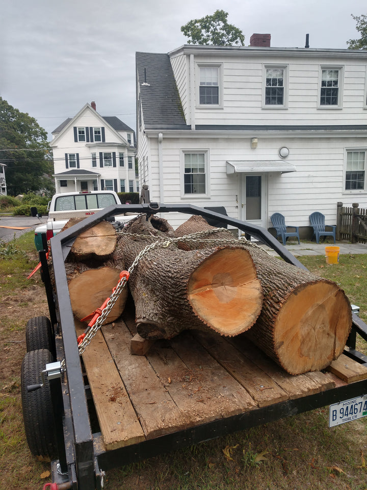 urban slab lumber, Gardiner, Maine. Log arch trailer used to get Norway Maple - urban lumber in Maine.