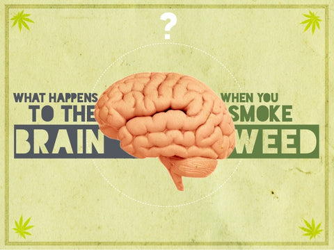 weed effect on brain