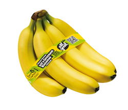 Banana Fair Trade bunch