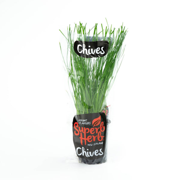 Chives Herb living - Superb Herb Medium Pottle