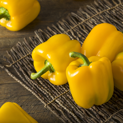 Capsicums Yellow each