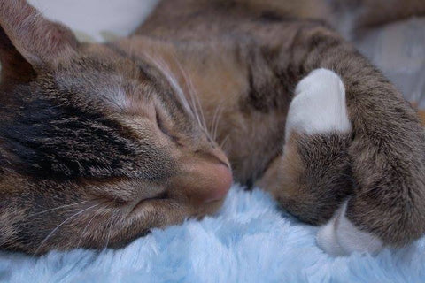 Phoenix Sweets Happy Paws Cat Blog 貓 流浪 動物
